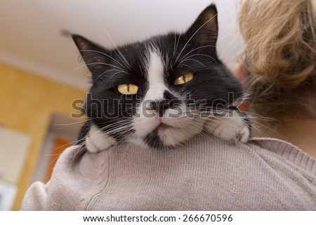 big black and white cat sitting on the shoulder of his mistress