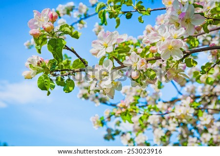 big branch of blossoming apple tree on sky background instagram stile  - stock photo