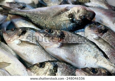 big bream caught fresh in the Mediterranean Sea on sale in fish market - stock photo