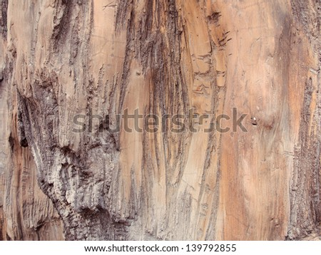big brown tree bark texture