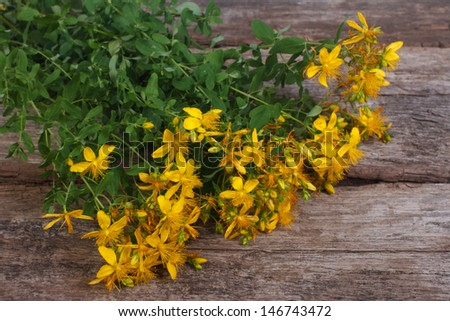 big bunch of fresh yellow flowers Hypericum on the table  - stock photo