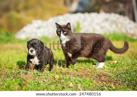 Big cat pursues a little puppy - stock photo