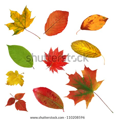 big collection beautiful colorful autumn leaves isolated on white background - stock photo
