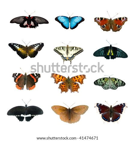 Big collection of butterflies isolated on a white background