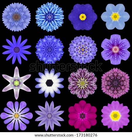 Big Collection of Various Blue Flowers. Kaleidoscopic Mandala Patterns Isolated on Black Background. Concentric Rose, Daisy, Primrose, Sunflower, Carnation, Marigold, Gerber, Flowers in Blue colors. - stock photo