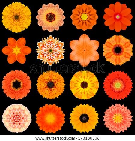 Big Collection of Various Orange Flowers. Kaleidoscopic Mandala Patterns Isolated on Black Background. Concentric Rose, Daisy, Primrose, Sunflower, Carnation, Marigold, Flowers in Orange colors. - stock photo