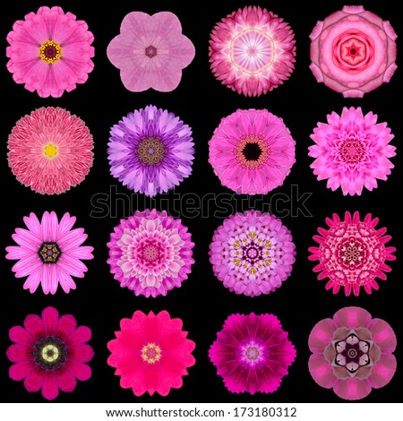 Big Collection of Various Purple Flowers. Kaleidoscopic Mandala Patterns Isolated on Black Background. Concentric Rose, Daisy, Primrose, Sunflower, Carnation, Flowers in Yellow and Purple colors. - stock photo