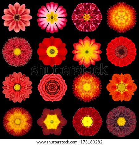 Big Collection of Various Red Flowers. Kaleidoscopic Mandala Patterns Isolated on Black Background. Concentric Rose, Daisy, Primrose, Sunflower, Carnation, Marigold, Flowers in Red colors. - stock photo