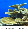 Big coral and small fishes in the Indian Ocean, Maldives - stock photo