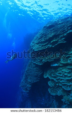 Big coral structure and scuba diver in the tropical reef of the red sea  - stock photo