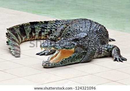Big crocodile in the zoo - stock photo