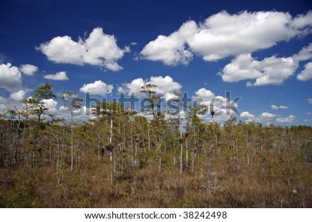 Big Cypress National Preserve - stock photo