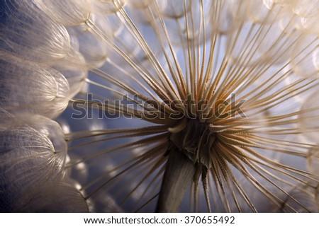 big dandelion on a blue background - stock photo
