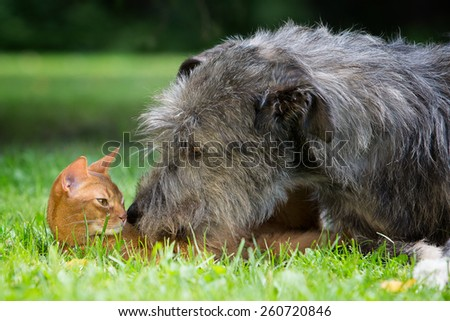 Big Dog and cat friendship - stock photo