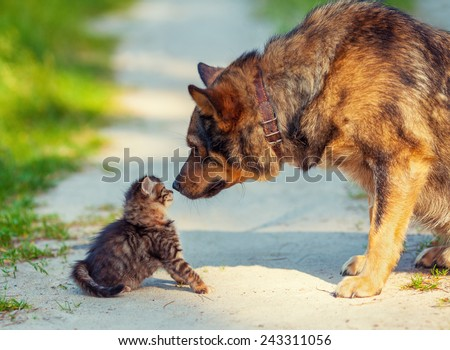 Big dog and little kitten sniffing each other outdoors - stock photo