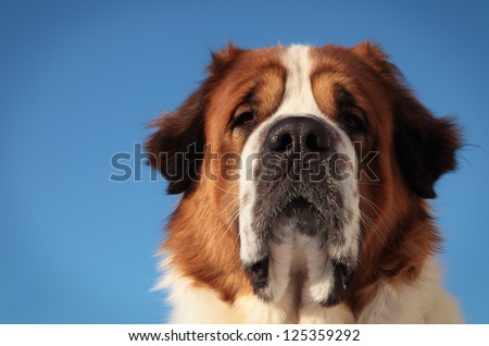 big dog on a background of blue sky - stock photo