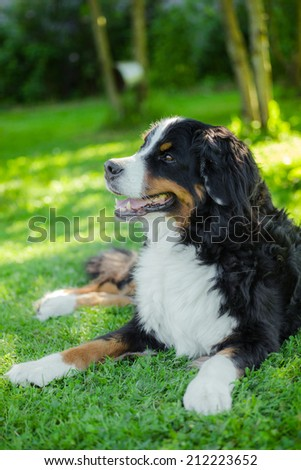 Big dog on nature - stock photo