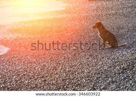 Big dog on the rocky seashore - stock photo