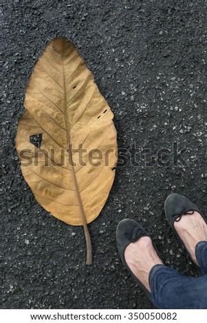 Big fallen leaf on the ground - stock photo