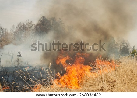 Big fire on agricultural land near forest. Flame and clouds of dark smoke - stock photo