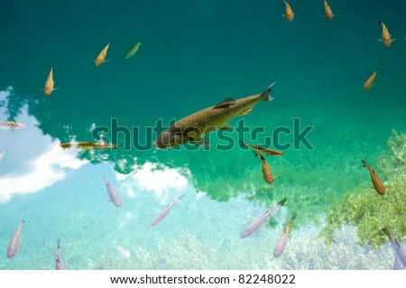 Big fish and the others - stock photo
