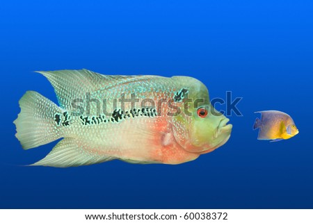 Big Fish Eating Small Fish Stock Images Royalty Free