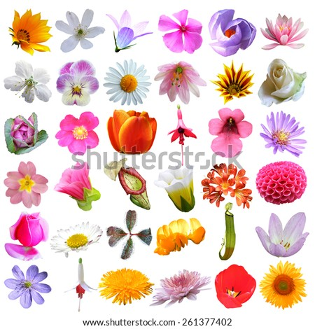 big flowers collection isolated on white background - stock photo
