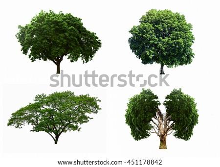 Big four tree sets isolated on white background. - stock photo