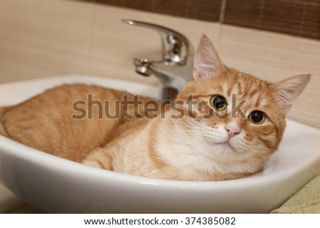 Big ginger cat lying in a white sink