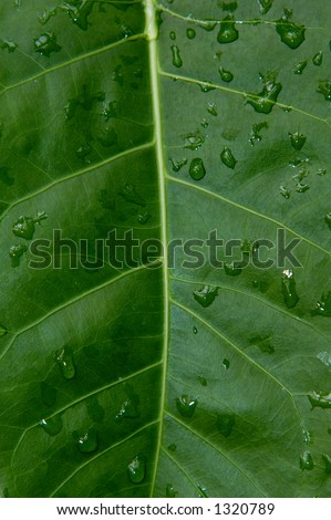 Big green leaf closeup macro organic background texture