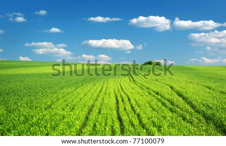 Big green meadow. Nature composition.