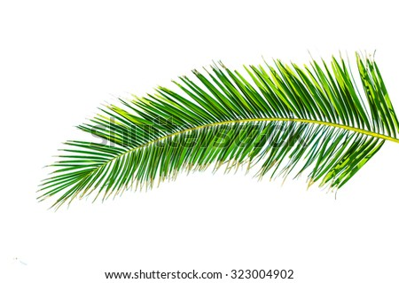 Big green palm leaf isolated on white - stock photo