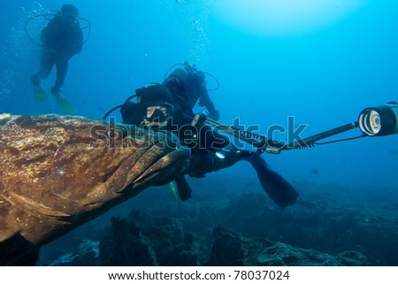 Big grouper and divers - stock photo