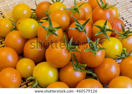 Big harvest of tomato in home garden at Los Angeles