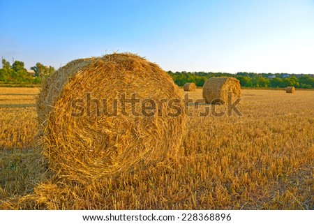 Big hay rolls on a background of blue sky - stock photo