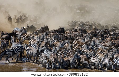 Big herd of wildebeest is about Mara River. Great Migration. Kenya. Tanzania. Masai Mara National Park. An excellent illustration. - stock photo