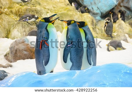 Big King penguins in Loro Parque, Tenerife, Canary Islands - stock photo
