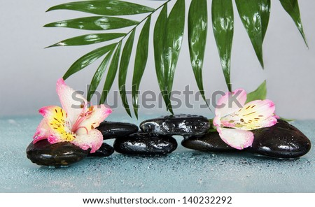 Big leaf of a howea over stones and an alstroemeria flower in water drops, on a gray background
