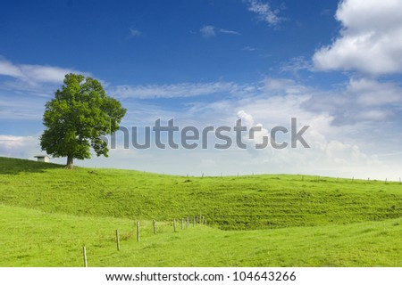 big lime tree, small hut and wooden fence at green hill with blue sky at spring - stock photo