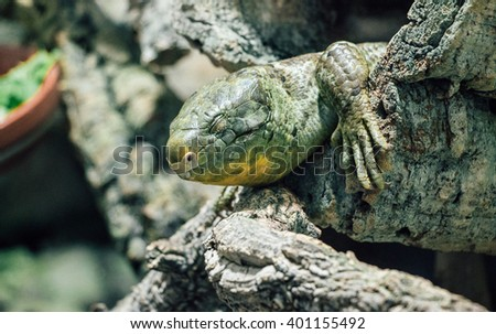 Big lizard on a branch