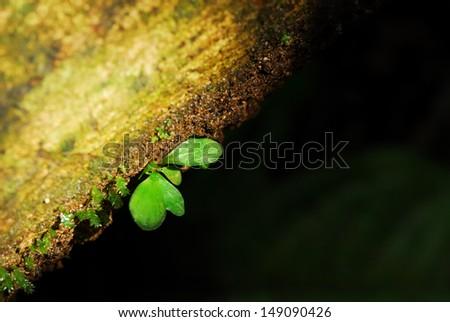 Big moss leaf on the dark background - stock photo