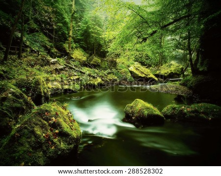 Big mossy sandstone boulders in water of mountain river. . Gulch covered beeches and maple trees with fresh green leaves, rain drops on light green fern.  - stock photo