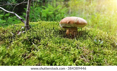 big mushroom in the forest with sun light - stock photo