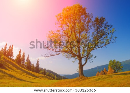 Big oak tree in a Carpathian mountain valley. Spring time. Colorful picture - stock photo