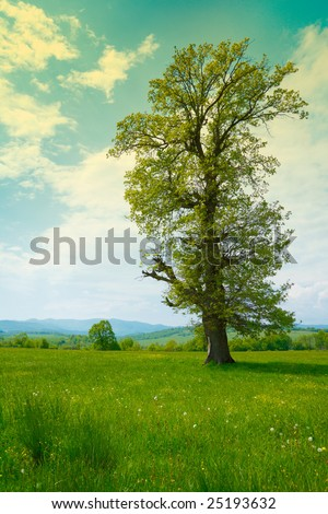 Big old tree in a green spring meadow