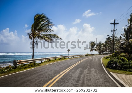 Big Palm Tree on the Side of the Road Facing the Sea - stock photo