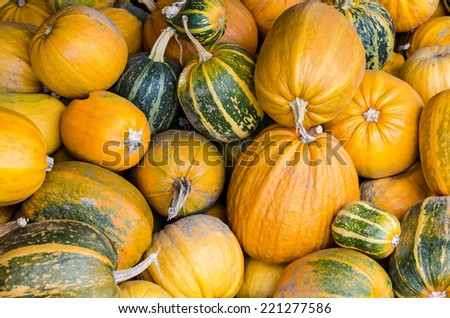 Big pile of different type of pumpkins. Autumnal harvest. Thanksgiving and halloween season. - stock photo