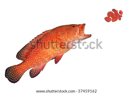Fish eating stock images royalty free images vectors for Big fish little fish poke