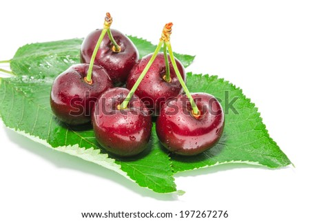 Big ripe dark cherry sweet juicy berries with water droplets on fresh green foliage isolated - stock photo