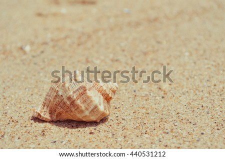 Big seashell on the paradise beach - stock photo